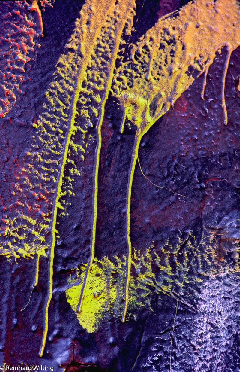 Gelbe strifen auf lila HH03 R Wilting