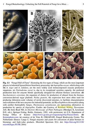 Fungi Book.JPG