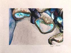Anemones Breathing