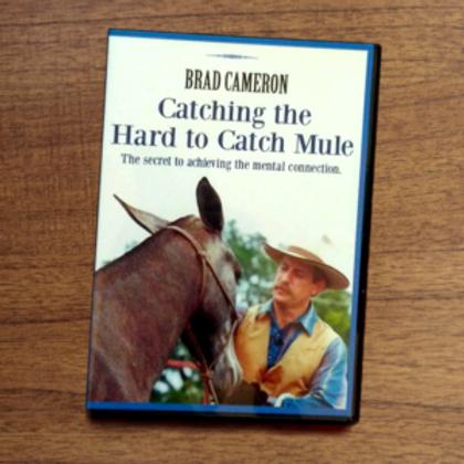 HARD TO CATCH MULE