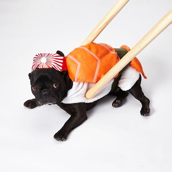 sushi_pup.jpg