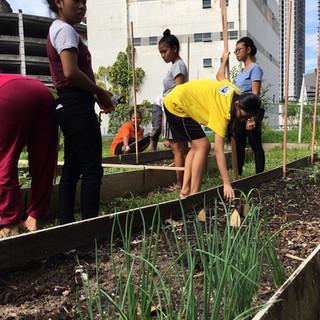 Urban Garden 3.jpeg
