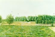 argine di Ghiarole a maggio