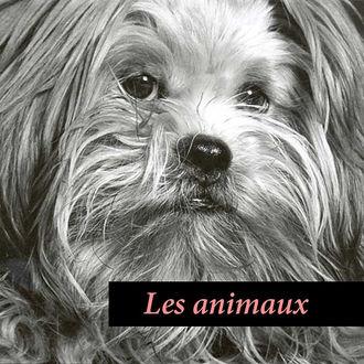 animauxWEB.jpg