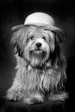 chien au chapeau