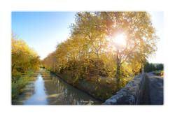 Canal du Midi No.3 - près de Pézens