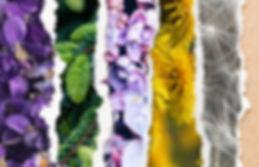 Forijthrills-Cover-websinar-cover.jpg
