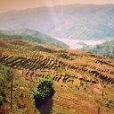 Pokhara . Nepal 1994