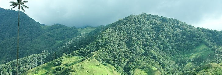 cocora-valley-picture-id4950545081.jpg