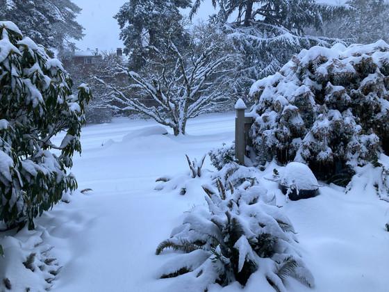 Snow Days with CCMI