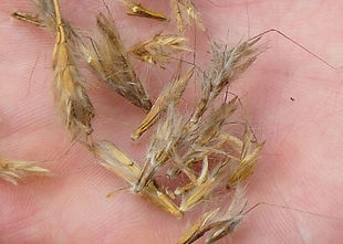 seed[2].JPG