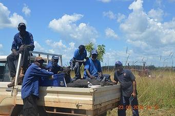 Thamarrurr Rangers feral pig management