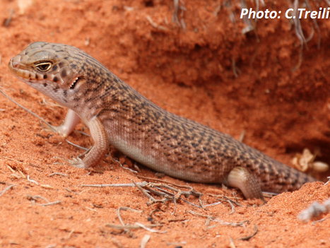 MEDIA RELEASE: Central Australians rally to conserve native species once thought extinct