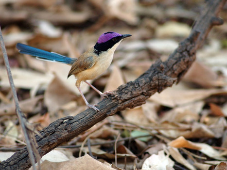 MEDIA RELEASE: Territorians share in Threatened Species Day success stories