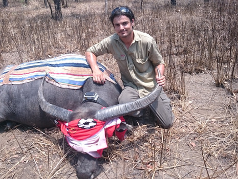 MEDIA RELEASE: Feral buffalo management in Kakadu National Park