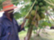 Rum Jungle Organics.jpg