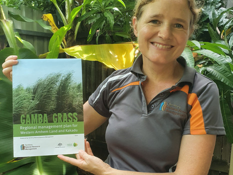 MEDIA RELEASE: Plan to Protect West Arnhem Land and Kakadu from Gamba Grass
