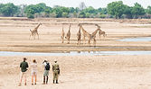 Shenton Safaris Walking Safaris 10 - Gir