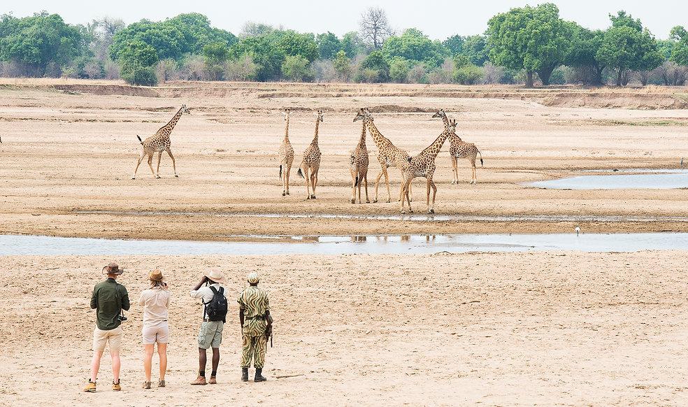 Shenton Safaris Walking Safaris 10 - Gir