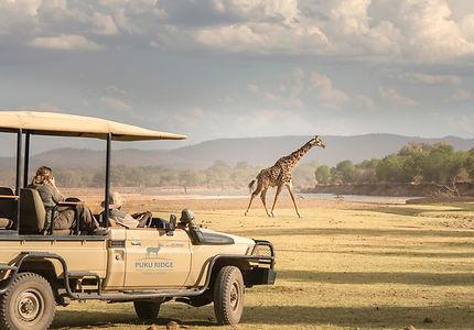 vehicle giraffe puku.jpg
