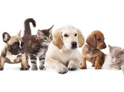 pet_group_welcome