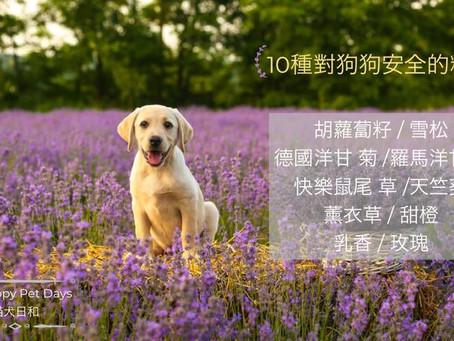 狗狗の精油