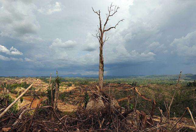palm-oil-malaysia-nutella.jpg