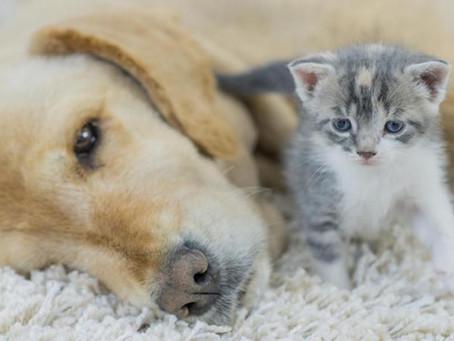 清潔老年和臥床的貓狗