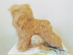 寵物美容師C級課程 Week 2