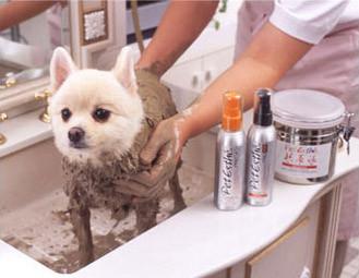 寵物美容師C級課程 Week 5-6