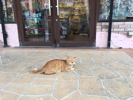 沖繩の猫さん