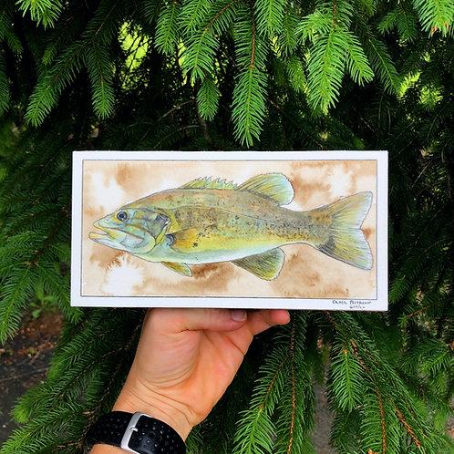 Smallmouth Bass (original)