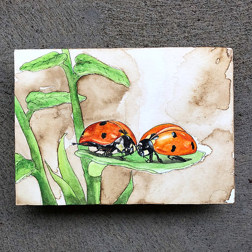 Ladybugs (Original)