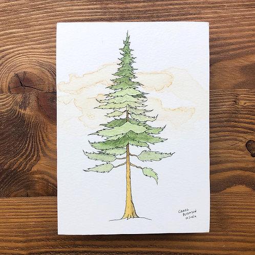 Pine Tree 2 (Original)