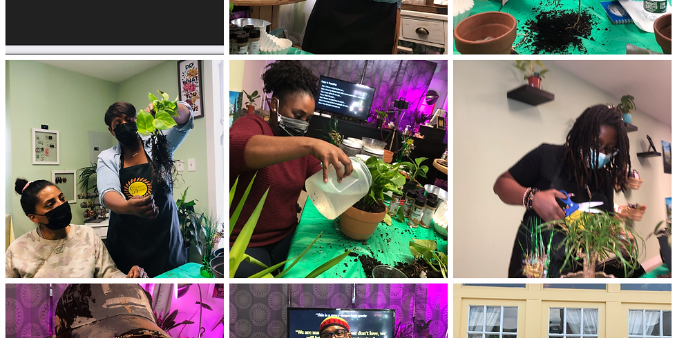 (Afternoon Workshop) Beginners Workshop to Repotting your Plants and General Maintenance.