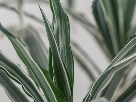 6 Best Indoor Plants for Beginners and How To Take Of Them.