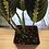 Thumbnail: Hirt's Red Prayer Plant - Maranta