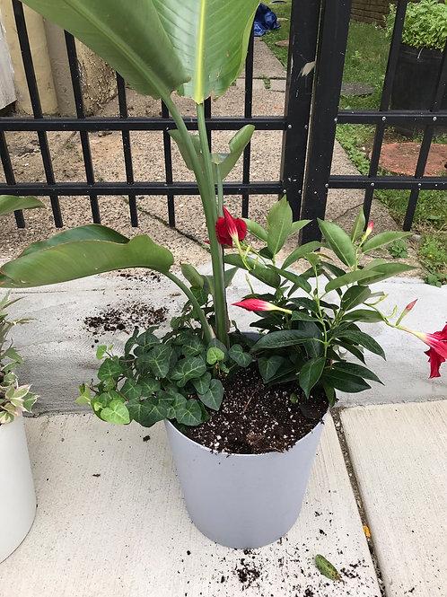 Bird of paradise planter