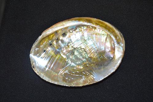 Natural Abalone Shell