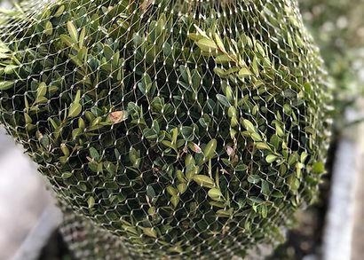 Rete in plastica tubolare per confezionamento piante
