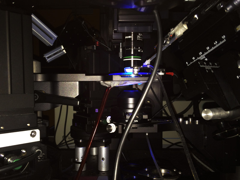 2-photon imaging
