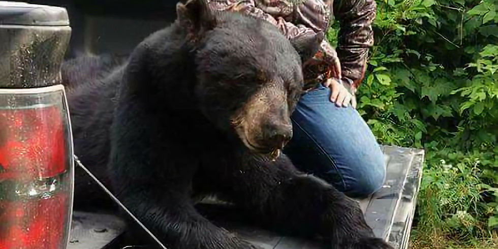 4 day Ladies Bear Hunt at North Road Outfitter's in Maine