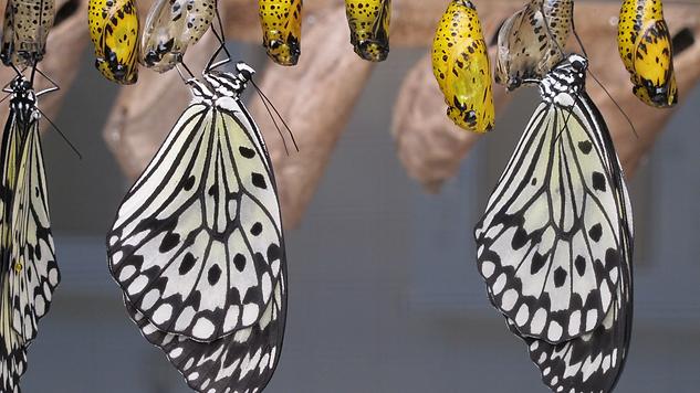 Daddy's little Butterflies (5).png