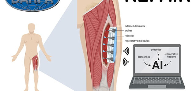 'Smart' wound-healing patch: DARPA awards $22 million grant