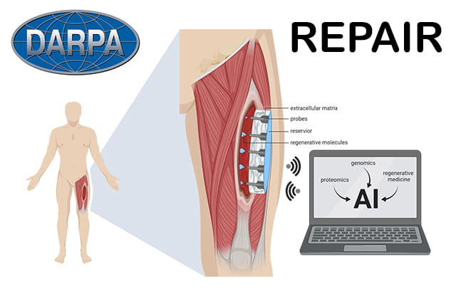 Concept for DARPA's BETR wound healing program
