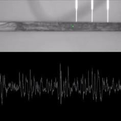 nanoSPEAR recroding of C. elegans