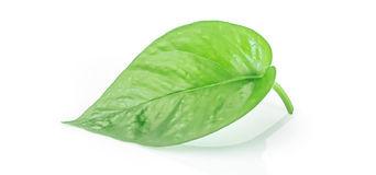 leaf-left.jpg