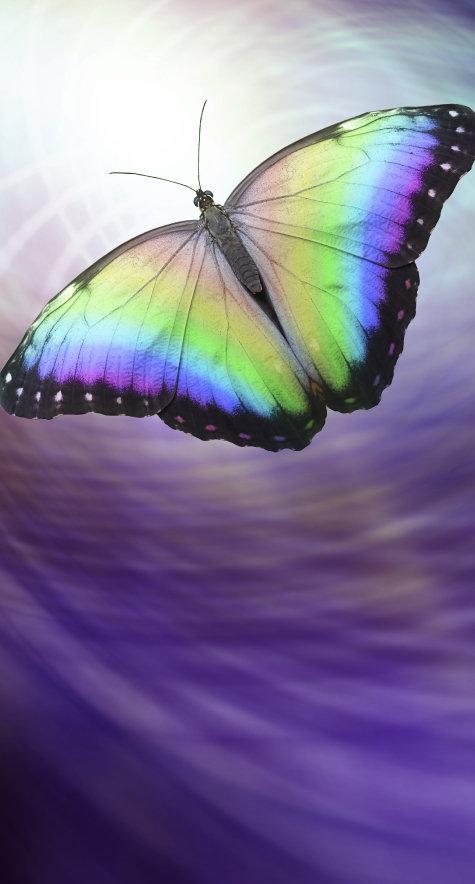 butterfly healing transformation