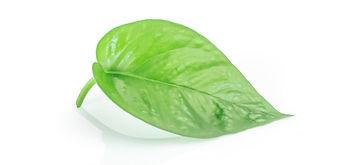 leaf-right.jpg