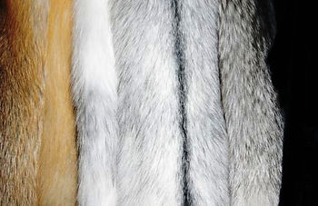 Ремонт и пошив меховых изделий.